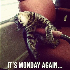 lolcat Monday