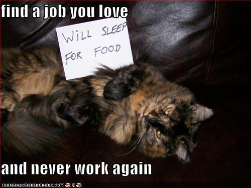 job lolcat