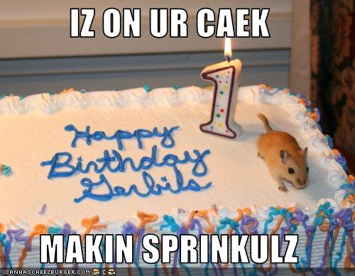 funny-pictures-gerbil-makes-sprinkles-for-your-birthday-cake